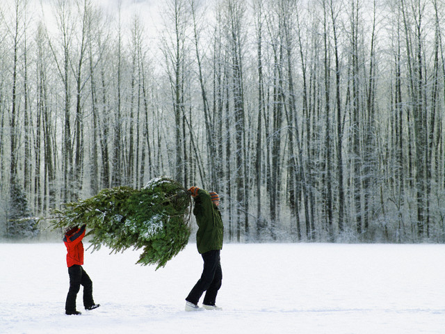 Father and Son Carry a Christmas Tree Through the Snow