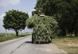 Farmers sit on a cart, loaded with fodder to feed animals, that is pulled by a tractor near Cardenas