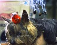 SMOKE RISES FROM MOXA BURNING ON BACK OF A DOG AT PET CLINIC IN TOKYO.