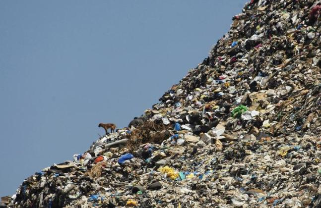 A stray dog stands on a rubbish dump at the seafront in Sidon, southern Lebanon, June 9, 2012. The dump, located near schools, hospitals and apartment blocks in Lebanon's third biggest city, has partially collapsed into the Mediterranean sea several times. REUTERS/Ali Hashisho (LEBANON - Tags: ENVIRONMENT ANIMALS TPX IMAGES OF THE DAY)