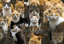 Cats crowd the harbour on Aoshima Island in the Ehime prefecture in southern Japan February 25, 2015. An army of cats rules the remote island in southern Japan, curling up in abandoned houses or strutting about in a fishing village that is overrun with felines outnumbering humans six to one. Picture taken February 25, 2015. To match story JAPAN-CATS/ REUTERS/Thomas Peter (JAPAN - Tags: SOCIETY ANIMALS TPX IMAGES OF THE DAY TRAVEL)