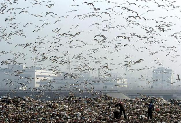 Sea gulls fly over a dump site looking for food as the sea freezes in Dalian, in northeastern China's Liaoning province January 16, 2007. The deteriorating condition of China's environment is a concern shared by the majority of its people, a recent survey shows, China Daily reported. CHINA OUT REUTERS/China Daily (CHINA)