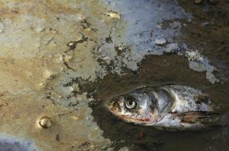 A dead fish is seen in a polluted pond on the outskirts of Yingtan, central China's Jiangxi province March 20, 2007. China's economy could face huge problems unless the country shifts to a more sustainable and environmentally friendly growth pattern, senior officials said. Picture taken March 20, 2007. REUTERS/Stringer (CHINA) CHINA OUT