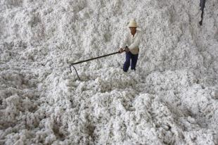 A farmer sorts out cotton at a cotton purchase site on the outskirts of Tianmen, central China's Hubei province October 26, 2007. China exported 47.4 billion U.S. dollars of cotton products in the first eight months in 2007, up 32.29 percent over the corresponding period last year, Xinhua News Agency reported. Picture taken October 26, 2007. REUTERS/Stringer (CHINA) CHINA OUT