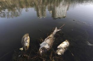Dead fish are seen floating on a polluted river in Hefei, Anhui province March 19, 2010. The Earth is literally covered in water, but more than a billion people lack access to clean water for drinking or sanitation as most water is salty or dirty. March 22 is World Water Day. REUTERS/Stringer (CHINA - Tags: ENVIRONMENT ANIMALS)