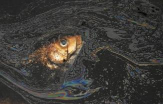 A dead fish is seen floating in a polluted river on the outskirts of Yingtan, Jiangxi province March 20, 2010. The Earth is literally covered in water, but more than a billion people lack access to clean water for drinking or sanitation as most water is salty or dirty. March 22 is World Water Day. REUTERS/Stringer (CHINA - Tags: ENVIRONMENT ANIMALS SOCIETY) CHINA OUT. NO COMMERCIAL OR EDITORIAL SALES IN CHINA