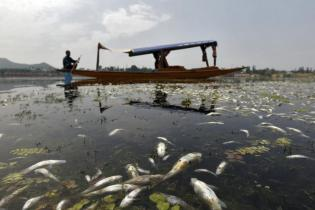 A Kashmiri boatman rows his boat past dead fishes floating on the waters of Nageen Lake in Srinagar August 6, 2012. Thousands of dead fishes were found floating on the lake on Sunday due to depletion of oxygen and the fluctuation of water temperature, according to local media. REUTERS/Fayaz Kabli (INDIAN-ADMINISTERED KASHMIR - Tags: ANIMALS ENVIRONMENT)