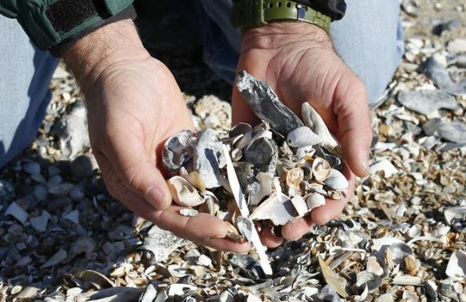 Sean Cornell, a field geologist who carries out research on and around Wallops Island, picks up seashells during a visit to the island in Virginia, on October 24, 2013. Wallops Island has been losing an average of 12 feet of shoreline a year. Picture taken October 24, 2013. To match Special Report SEALEVEL-FLOODING/CHESAPEAKE/ REUTERS/Kevin Lamarque (UNITED STATES - Tags: ENVIRONMENT SOCIETY)