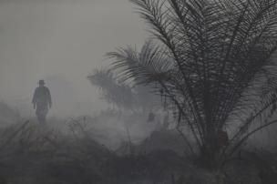 An Indonesian soldier walks between burned palm oil trees as haze shroud a palm oil plantation at Jebus village in Muaro Jambi, on the Indonesian island of Sumatra, September 16, 2015. A worsening haze across northern Indonesia, neighbouring Singapore and parts of Malaysia on Tuesday forced some schools to close and airlines to delay flights, while Indonesia ordered a crackdown against lighting fires to clear forested land. REUTERS/Beawiharta