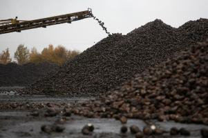 A conveyor belt is used to pile sugar beets at Znamensky Sugar Plant, owned by Russian farming conglomerate Rusagro (Ros Agro Plc), in the settlement of Znamenka, in Tambov region, Russia October 13, 2017. Picture taken October 13, 2017. REUTERS/Sergei Karpukhin