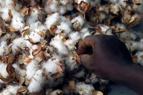 A worker selects cotton in Bobo-Dioulasso, Burkina Faso March 7, 2017. Picture taken March 7, 2017. To match Special Report MONSANTO-BURKINA/COTTON REUTERS/Luc Gnago